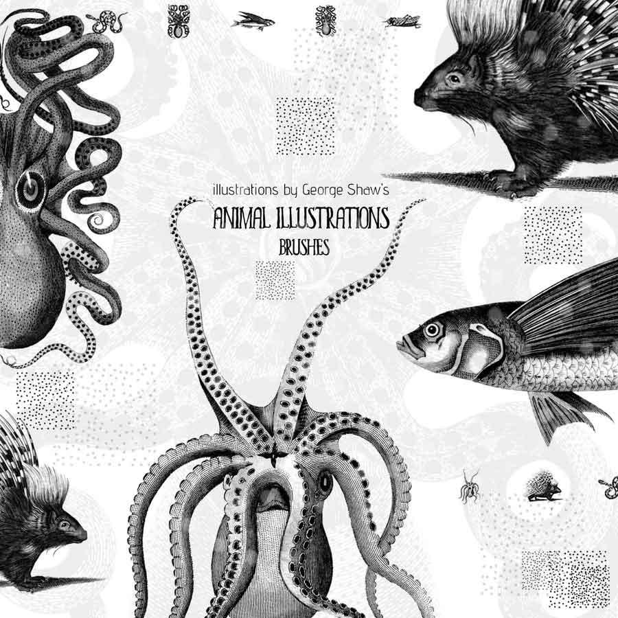 Free Animal Illustrations Brushes