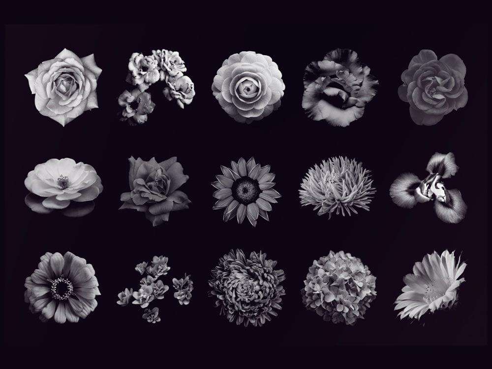 Free Flower Photoshop Brushes